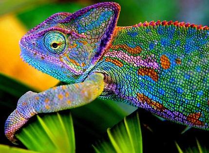 Chameleon Magnets aka Electrically Induced Ferromagnetism…