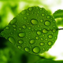The Artificial Leaf on Silicon Trees…