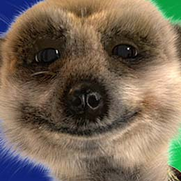 Laughter is Contagious, Just Try To Watch a Meerkat Laugh without Chuckling Yourself…