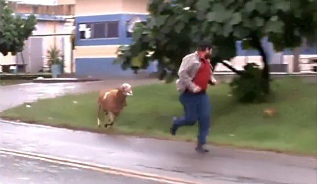 Crazy Goat Terrorizes Brazilian Town…