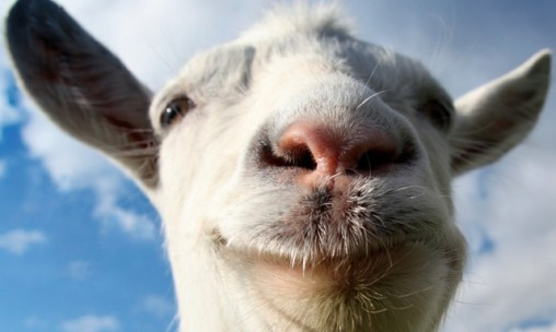 Goat Simulator is now on Android and iOS, Cross Platform Goat Madness…