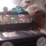 Amaro and Walden's Joyride, Amusing Animated Adventures…