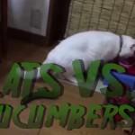 Cats versus Cucumbers, Startlingly Hilarious.