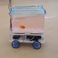 A Fish Learns to Drive…